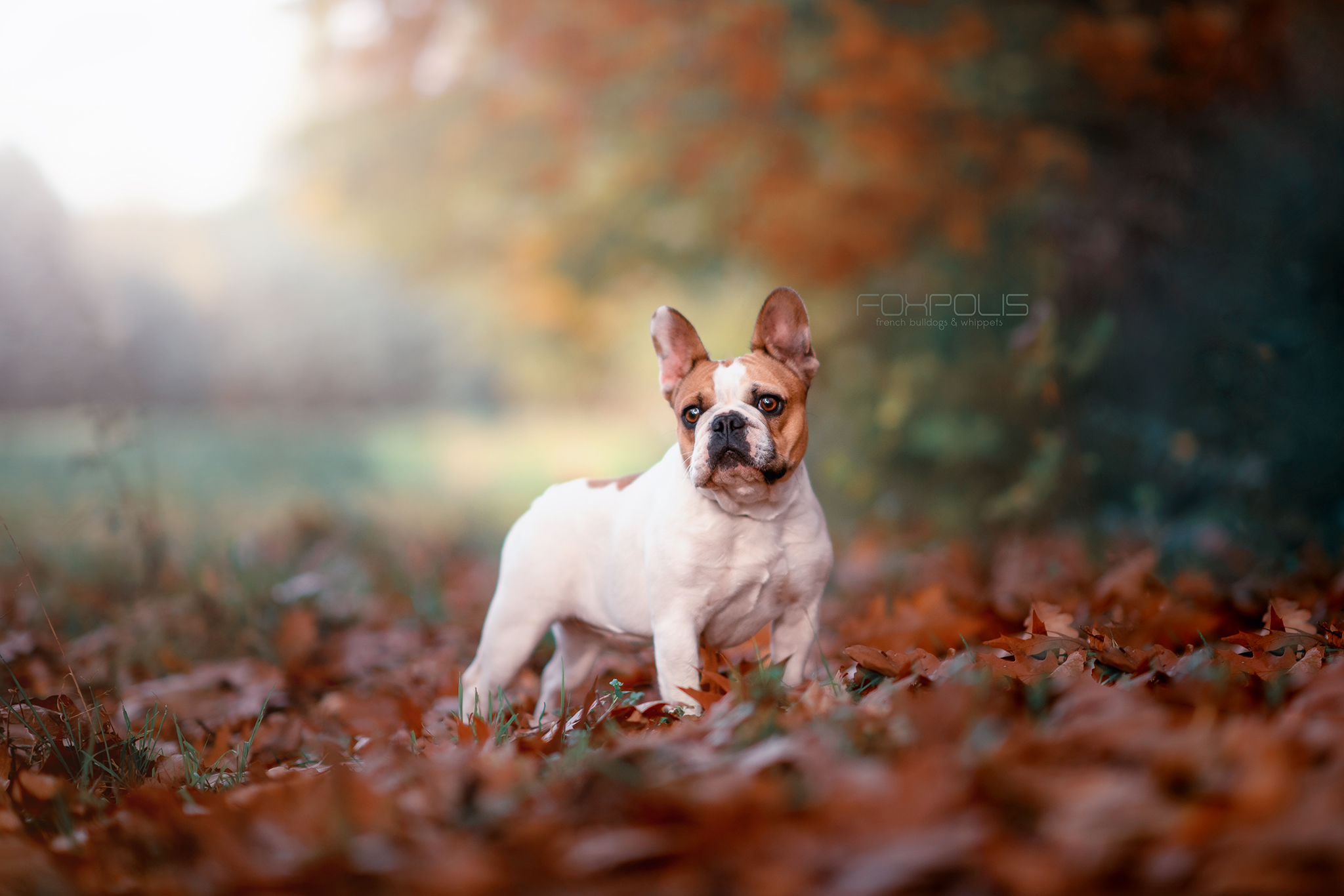Autumn dog portraits