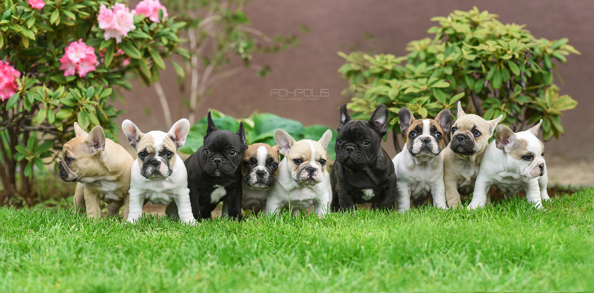 Fenchies, frenchies, frenchies :)